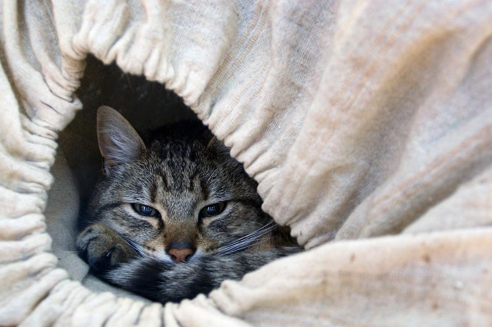chat couché caché