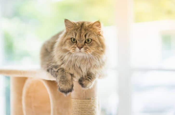 chat arbre à chat