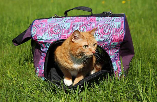 chat sac de transport