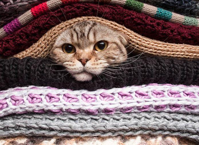 chat caché couvertures