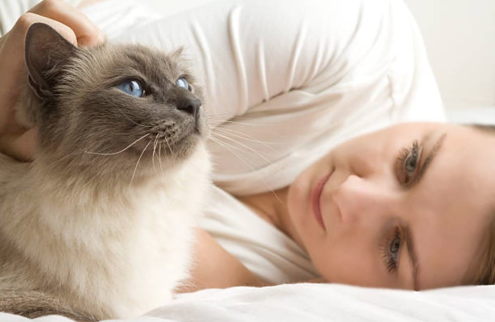 chat câlin humain