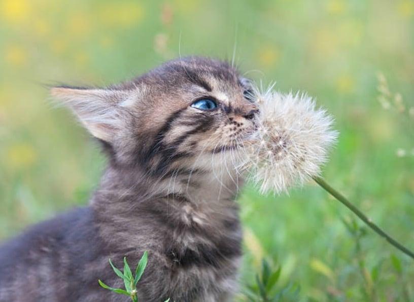 chaton sent plante jardin