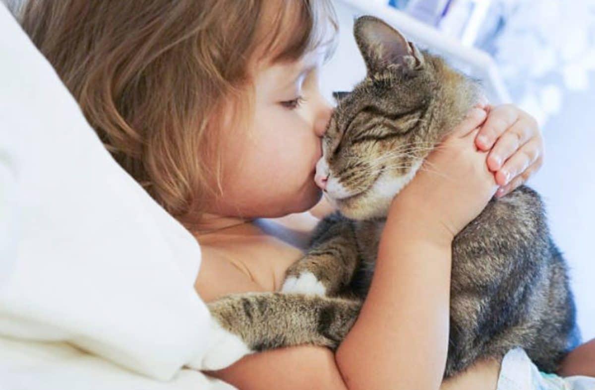 """Résultat de recherche d'images pour """"chat bisou"""""""