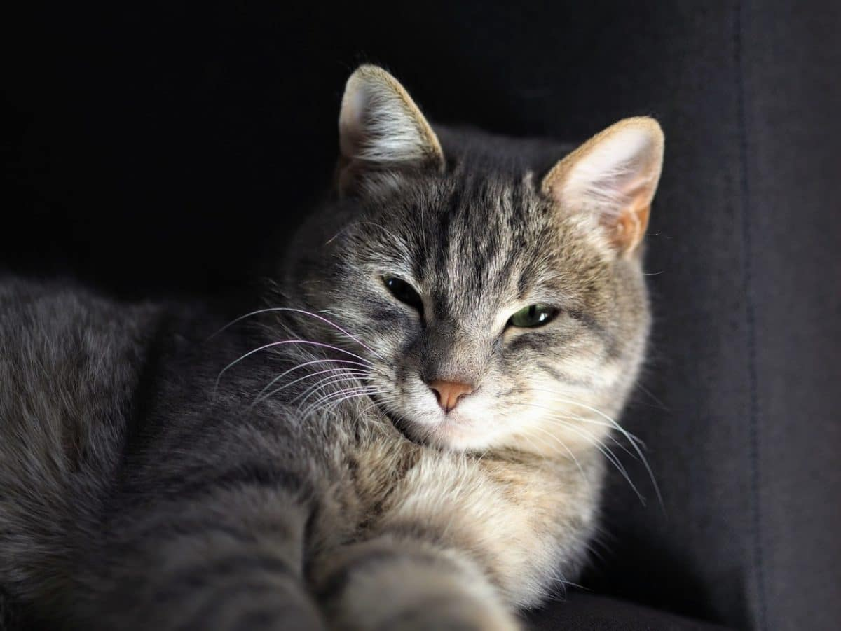 chat plisse yeux