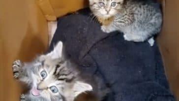 chatons trouvés