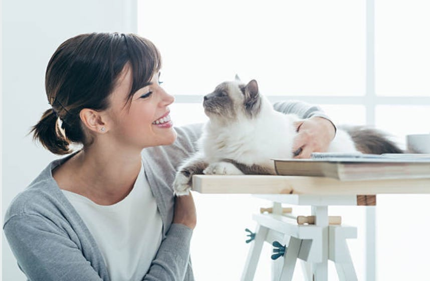 femme chat appartement