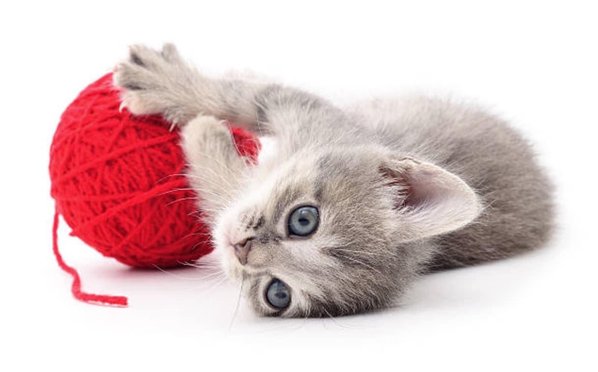 chaton jouet pelote