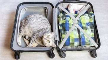chat voyage valise