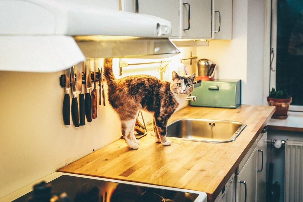chat cuisine