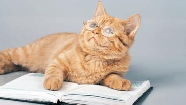 chat intelligent lunettes livre
