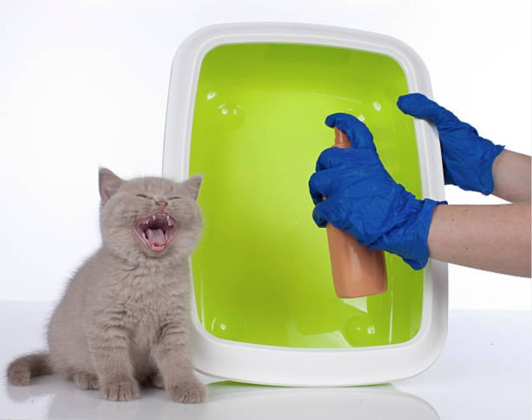 chaton litière nettoyer