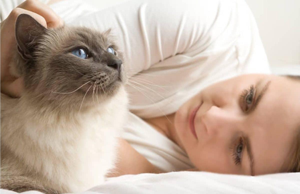 chat câlin lit femme humain