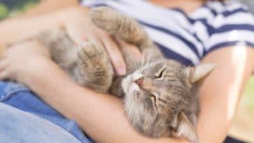 chat câlin humain femme bras
