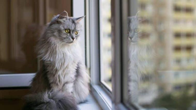 chat triste fenêtre