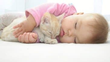 chaton dort bébé enfant