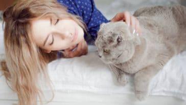chat calin femme lit