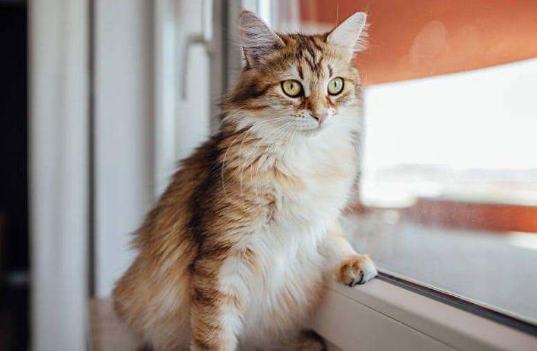 chat regarde fenêtre