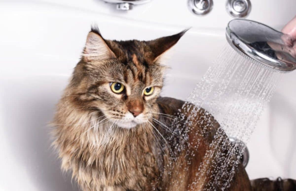 chat bain douche eau