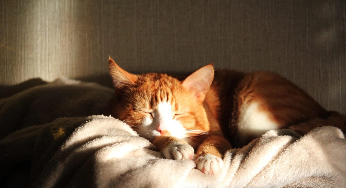 Chat soleil