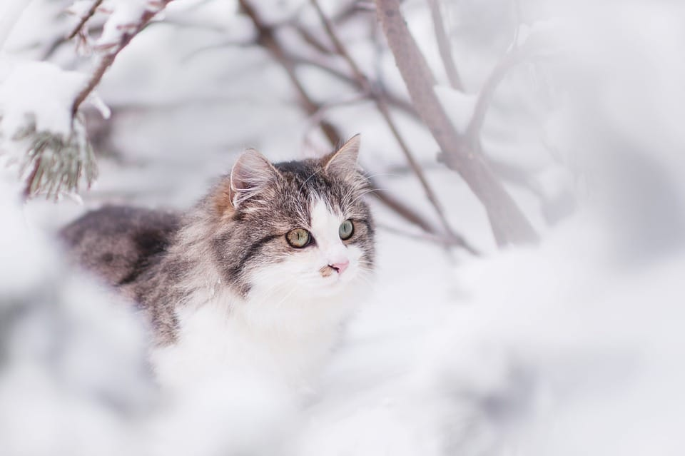 chat neige hiver
