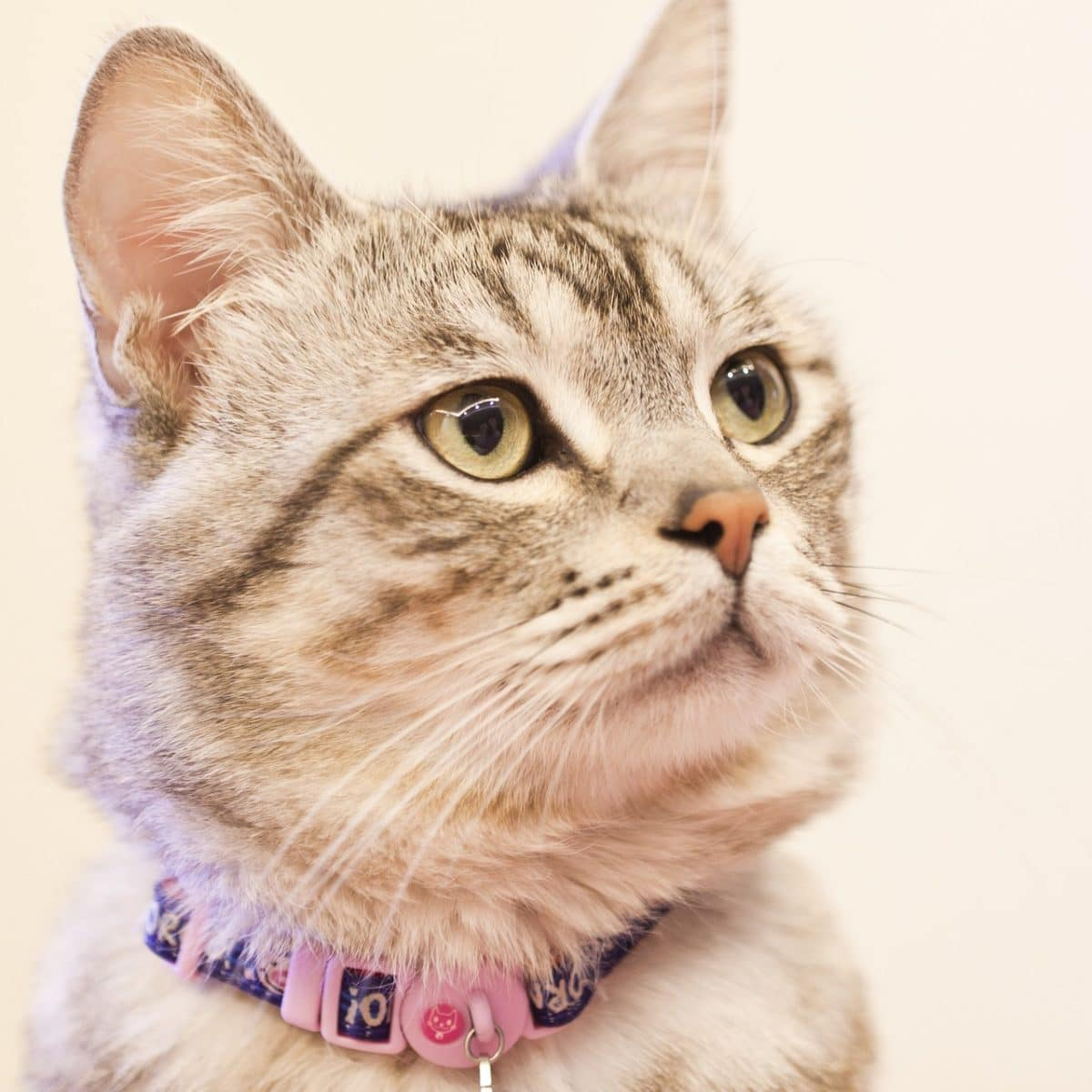 chat portrait collier