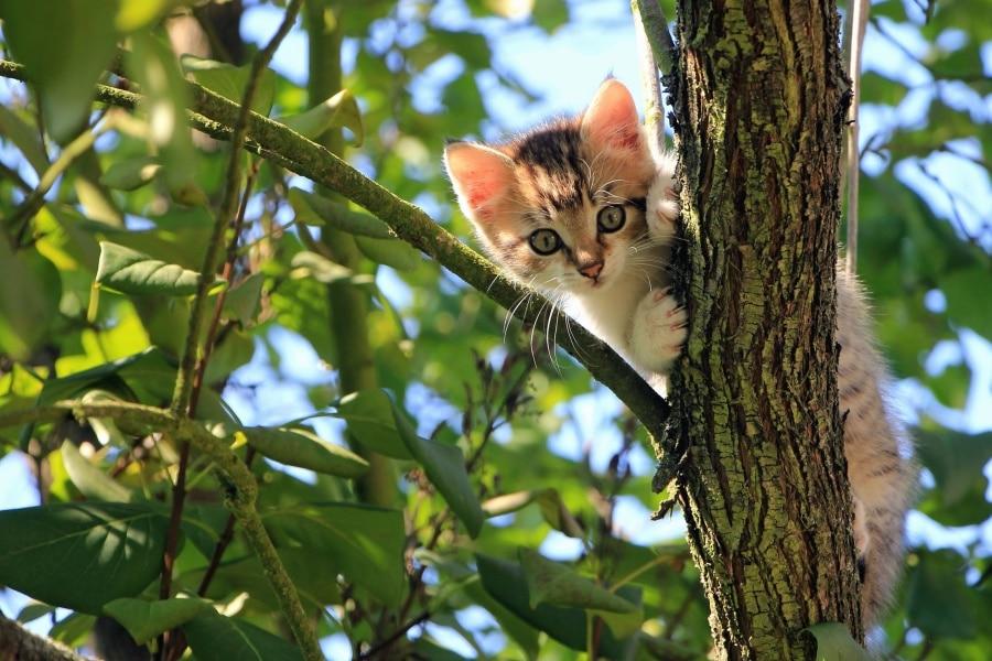 chaton arbre