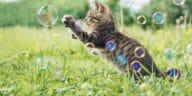 chaton joue bulles