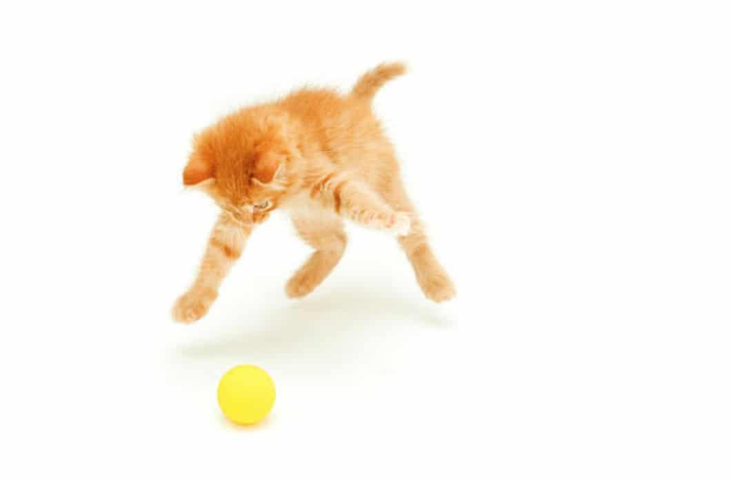 chaton roux joue balle