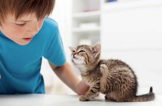 chaton gratte enfant