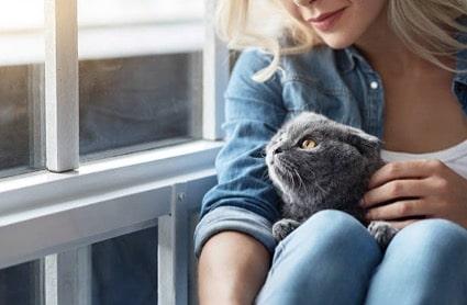 comment savoir si une chatte est enceinte 10 signes qui. Black Bedroom Furniture Sets. Home Design Ideas