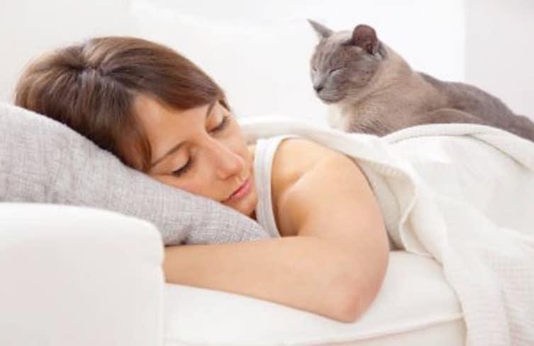 chat dort couché lit femme