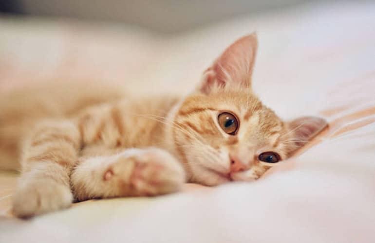 chat couché lit triste ennui