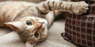 chat couché canapé