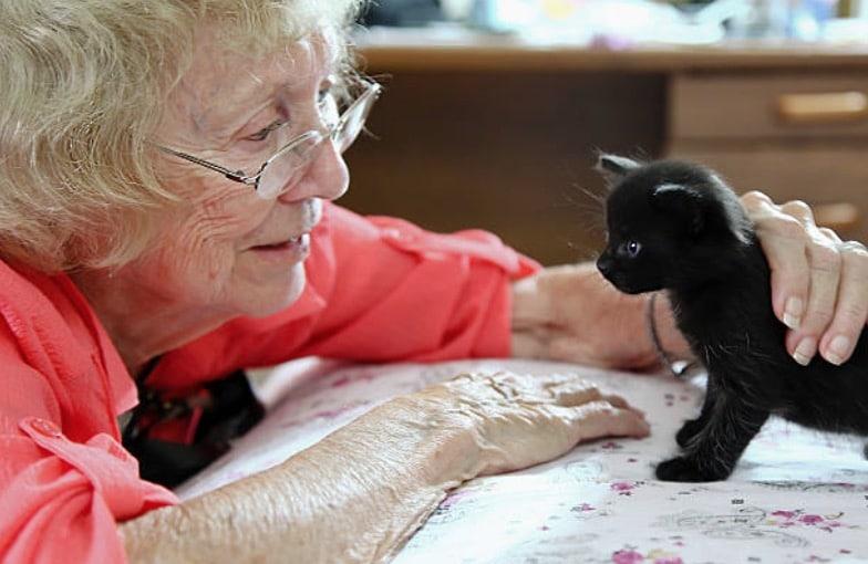 femme personne âgée câlin chaton