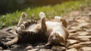 chat roule par terre