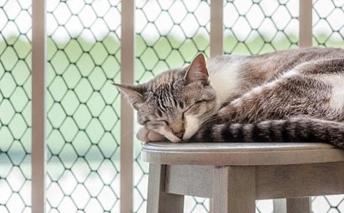 chat dort couché balcon