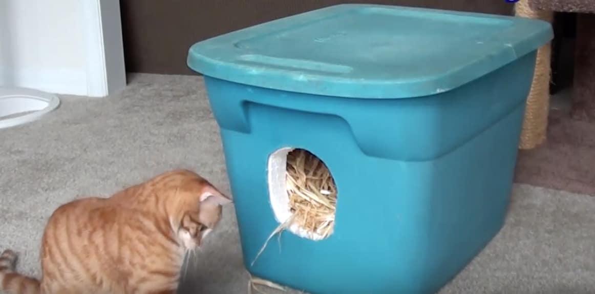 abri chat