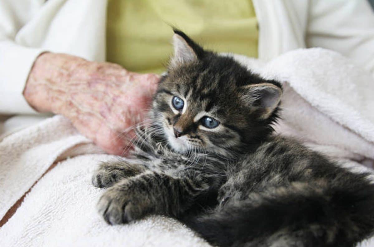 chaton personne âgée câlin