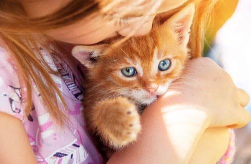 chaton roux câlin enfant