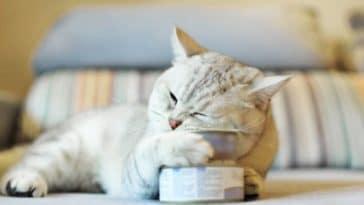 chat mange boîte de conserve