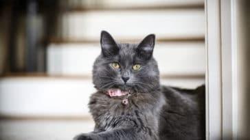 chat clochette