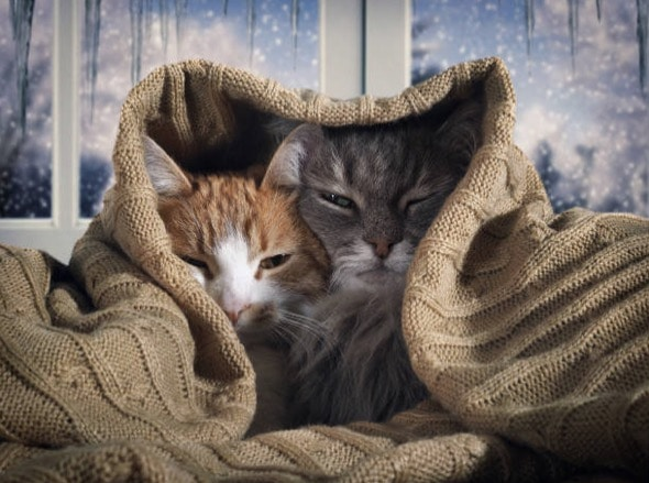 chats couverture froid hiver neige
