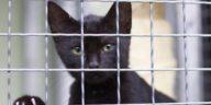 chat noir enfermé