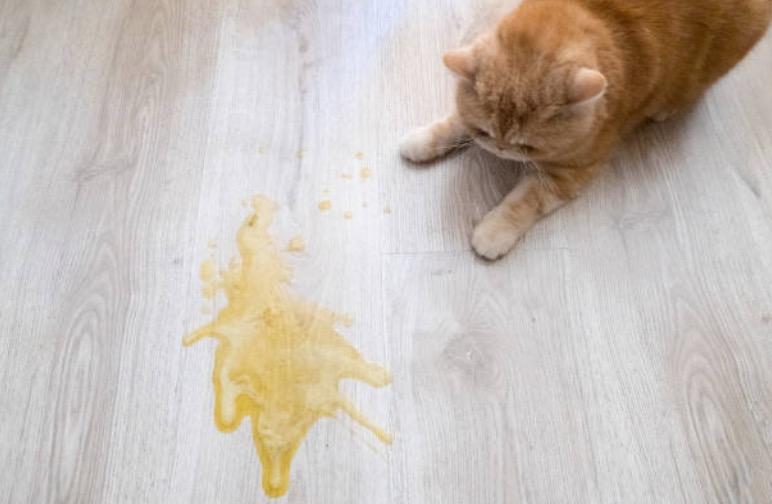 chat pipi urine