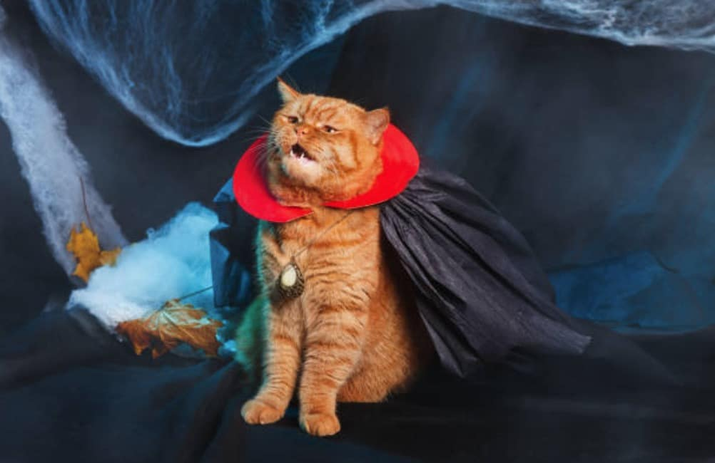 chat déguisement vampire