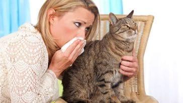 femme allergie chat