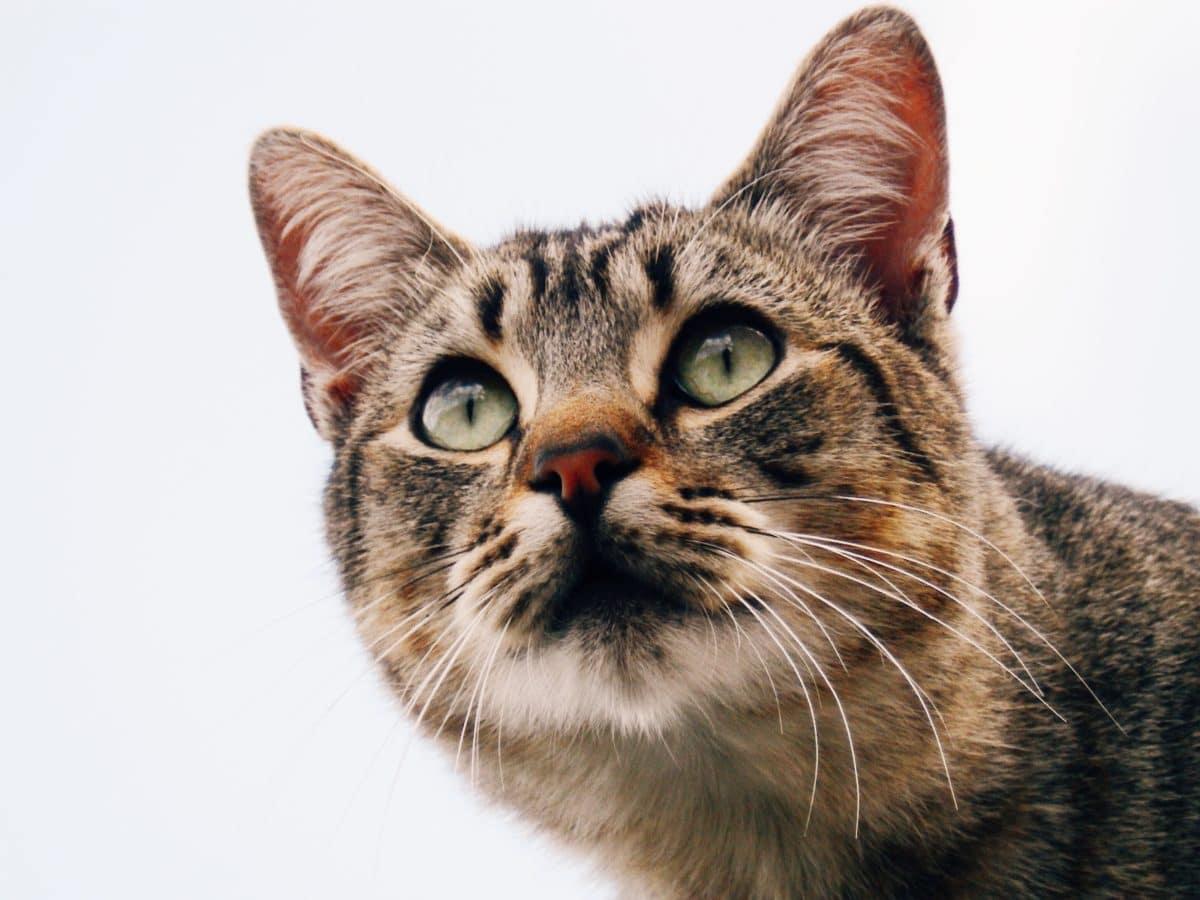 Mon Chat Dort Sur Mes Pieds 5 accessoires indispensables pour un chat qui reste souvent seul