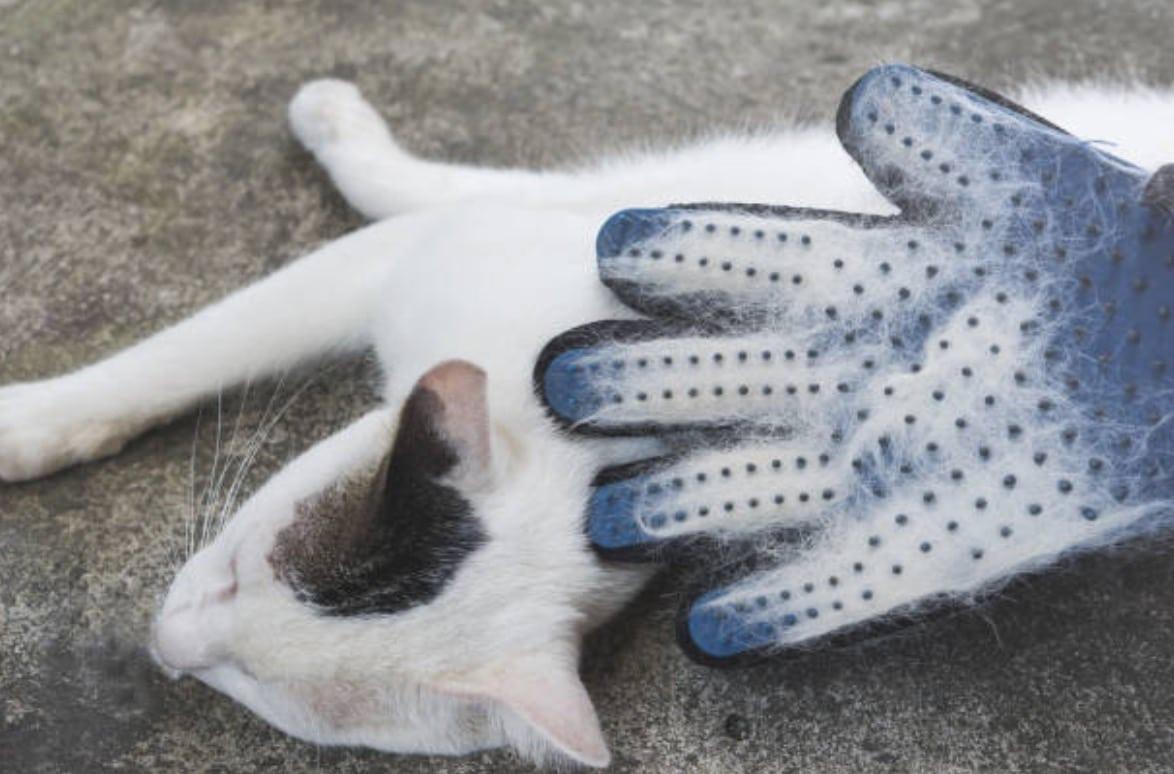 chat gant brosse