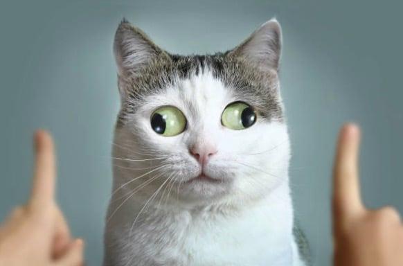 chat louche