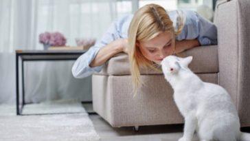 chat femme câlin